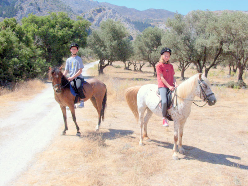 Tall ponies for the young riders